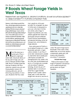 P Boosts Wheat Forage Yields In West Texas