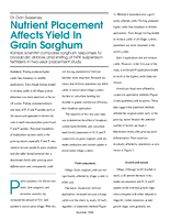 Nutrient Placement Affects Yield In Grain Sorghum