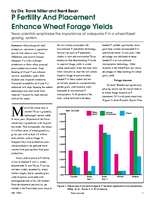 P Fertility And Placement Enhance Wheat Forage Yields