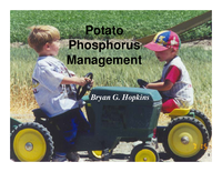 Potato Phosphorus Management