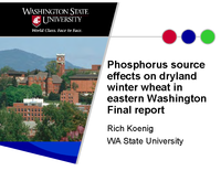 Phosphorus Source Effects on Dryland Winter Wheat in Eastern Washington