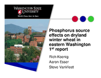 Phosphorus source effects on dryland winter wheat in eastern Washington 1st report