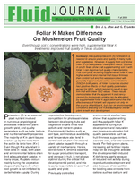 Foliar K Makes Difference On Muskmelon Fruit Quality