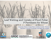Leaf Wetting and Uptake of Fluid Foliar P Fertilizers for Wheat