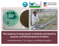 The response of wheat grown in Andisols and Oxisols to granular and fluid phosphorus fertilizers