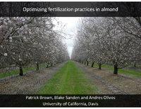 Optimizing fertilization practices in almond