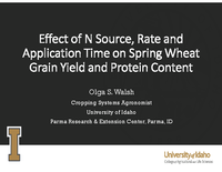 Effect of N Source, Rate and Application Time on Spring Wheat Grain Yield and Protein Content