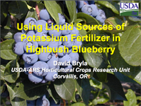 Using Liquid Sources of Potassium Fertilizer in Highbush Blueberry