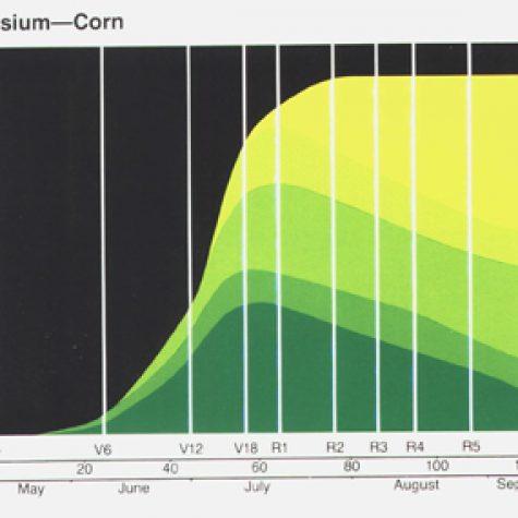 cornkaccum