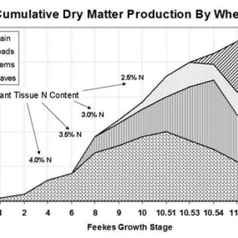 wheat-dry-matter-accumulation