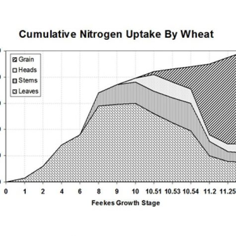 wheat-nitrogen-uptake