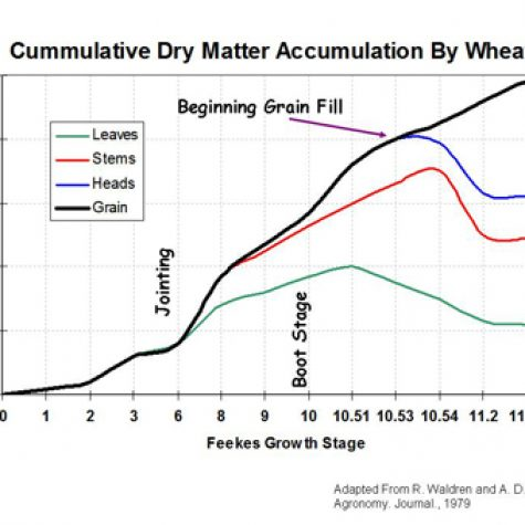 wheat-nutrient-uptake