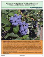 Potassium Fertigation In Highbush Blueberry