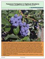 Potassium Fertigation In Highbush Blueberry