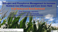 Nitrogen and Phosphorus Management to Increase Nutrient Use Efficiency and Corn Grain Yield