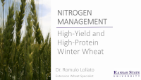 NITROGEN MANAGEMENT: High-Yield and High-Protein Winter Wheat