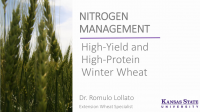N Management High-Yield and High-Protein Winter Wheat – Lollato